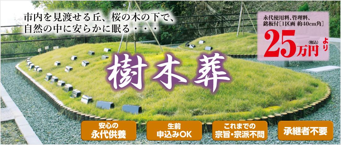 area_kochi_jumokuso.png